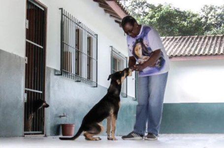 Adoção tardia: chance de recomeço para animais adultos