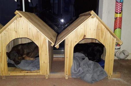 Empresária cria 'cãodomínio' para abrigar cães de rua no interior de SP