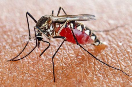 Risco de morte por febre amarela pode ser identificado mais cedo
