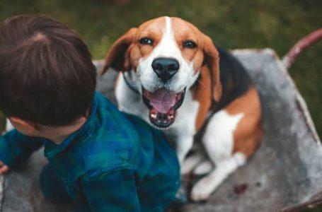 Dia das Crianças: adotar um animal é coisa séria e exige planejamento