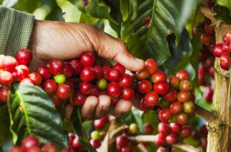 Fórum debate sustentabilidade social, ambiental e econômica na cafeicultura