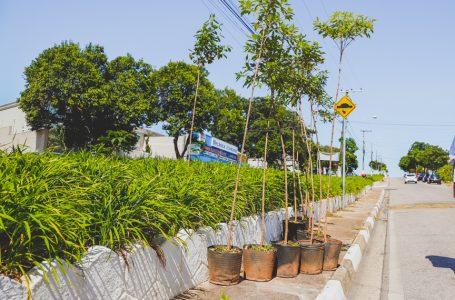 Prefeitura revitaliza canteiro central da Avenida Guanabara em Itupeva