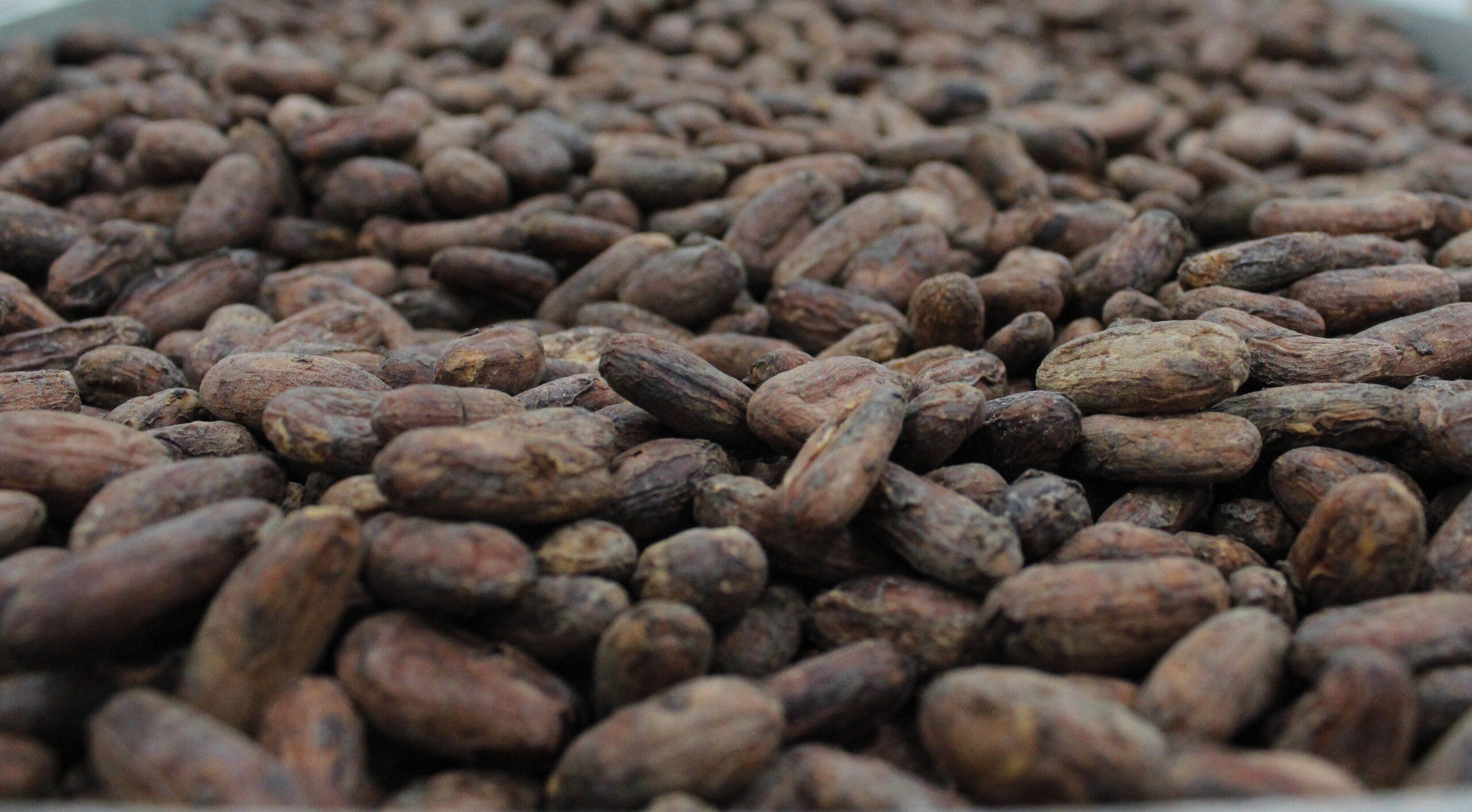 7 de Julho: Dia Internacional do Chocolate