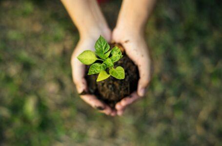 Saiba mais sobre o contexto das questões ambientais no Brasil