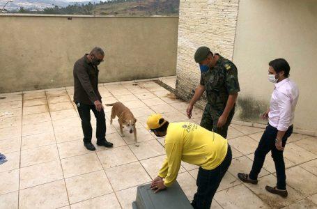 Cajamar contra maus tratos de animais: cãozinho é resgatado após denúncia de abandono